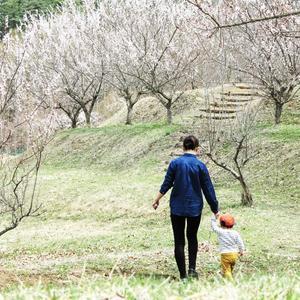 家族で花見 - 山谷彷徨