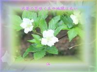 フォト575『木苺の花咲く丘や地球は丸い』zqw2202 - 老仁のハッピーライフ