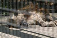 羽村市動物公園その2 - 動物園に嵌り中
