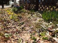 少しずつの庭の春とマーマレード - 北緯44度の雑記帳