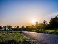 備中国分寺レンゲがきれい - 道草Photo Life2