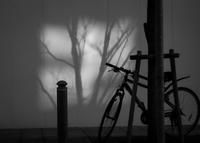 骨格 - haze's photos