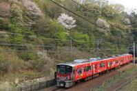 山桜 - かにさんの横歩き散歩日記