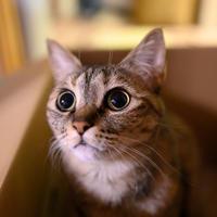 何が見えた? - 猫と夕焼け