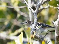 稲敷にいた野鳥達 - コーヒー党の野鳥と自然 パート2