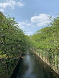 【中目黒】目黒川お散歩からの土山人♡ - casa del sole