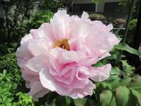 初夏の花々たち♪ - 良かった~探しの人生