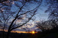 桜sunset - It's only photo 2