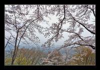 標高500mの桜 - Desire