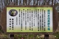 飯豊町添川の水芭蕉 - yama10フォトライフ