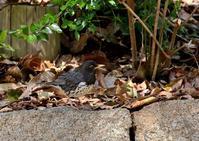 いろいろと・・・ - 一期一会の野鳥たち