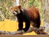 八景島シーパラダイスと伊豆シャボテン動物公園の旅行記を姉妹ブログ「レッサーパンダ紀行」にアップしました - (続)レッサーパンダ紀行