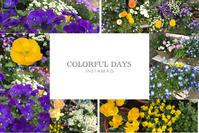 具合の悪い日 と 花たち - mypotteaセンチメンタルな日々with photos5