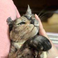 ムニー - 賃貸ネコ暮らし|賃貸住宅でネコを室内飼いする工夫