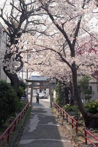 桜素戔嗚神社その2 - YAJIS OFFICE BLOG