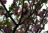乱れ咲き、春のパンまつり - al mare 気ままにmamma (たまにnonna)