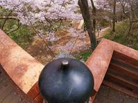 天下第一の桜・日本三大桜名所・信州たかとおを鑑賞(1)・・・平成最後の桜になるか?♪ - 『私のデジタル写真眼』