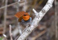 オレンジな子 - Love birds !