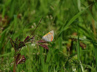 城北大橋西側 淀川河川敷で蝶を撮影。 - 写真で楽しんでます! スマホ画像!