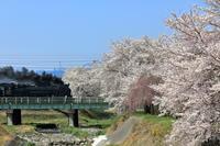 駆け抜けて桜 - 蒸気屋が贈る日々の写真-exciteVer