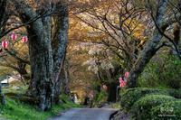 桜の道 - duke days