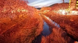 いしかわ桜谷 桜の夜景1 @福島県石川町 - 963-7837
