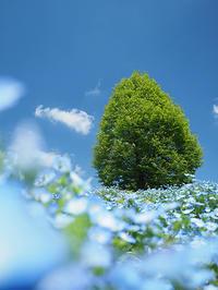 吉住志穂さんの「可憐な花撮影術」撮影会(無料・定員6名) - 風景写真出版からのおしらせ