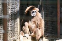 羽村市動物公園その3 - 動物園に嵌り中
