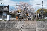 八幡神社 - ひねもすのたりの時かいな