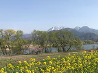 春がきました! - 湯の郷 野沢温泉 小さな民宿 和のやど なぐも