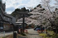 亀岡八幡宮桜 - SIMPLE PHOTO ALBUM