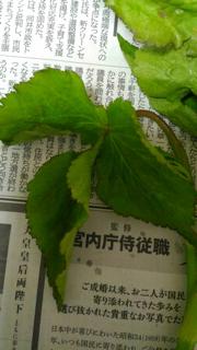 植物の名前 - 京都西陣 小さな暮らし