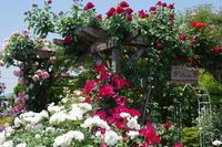 オープンガーデンのお知らせ - Rose&Farm