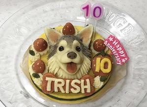 ♪ トリッシュ 10th Birthday ♪ - アリシアとソフィーは COOL BEAUTY?