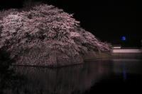 彦根城と桜 - とりあえず撮ってみました