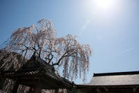 神宮寺の桜 - 詩輝彩物語