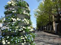 日本大通りも色とりどりの花々であふれてる♪横浜の春は花がいっぱいですよ♪ - ルソイの半バックパッカー旅