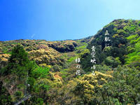 椎の花 - 霧島メジロのデジカメ日記