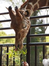 動物園7 - *ジカンのキリトリ*