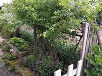 サクラソウとストロベリーキャンドル - natural garden~ shueの庭いじりと日々の覚書き
