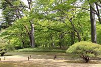 殿ヶ谷戸庭園でクマガイソウ、エビネなど - 子猫の迷い道Ⅱ