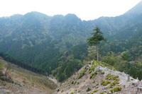 イワザクラ咲く舟伏山 (1,040.3M)   登頂 編 - 風の便り