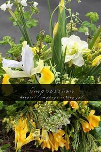 黄色のアイリス - Impression Days