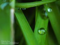 自宅皮下点滴23回目・雨の水曜日 - りさのフォトログ