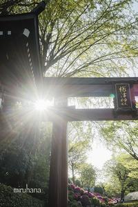文京区根津神社と界隈*縦構図さんぽ。 - MIRU'S PHOTO