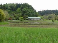 ちょっと、じゃまなんですが、、。 - 千葉県いすみ環境と文化のさとセンター