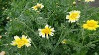 4月24日、私の家庭菜園だより❶ - 難病あっても、楽しく元気に暮らします(心満たされる生活)