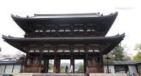 京都遅咲きのおむろ桜 in 仁和寺(にんなじ) - 日々の贈り物(私の宇都宮生活)