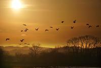 渡り鳥(宮島沼) - お茶にしませんか2