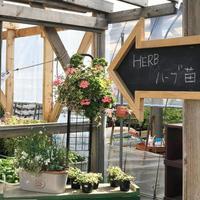 ハーブコーナー - さにべるスタッフblog     -Sunny Day's Garden-